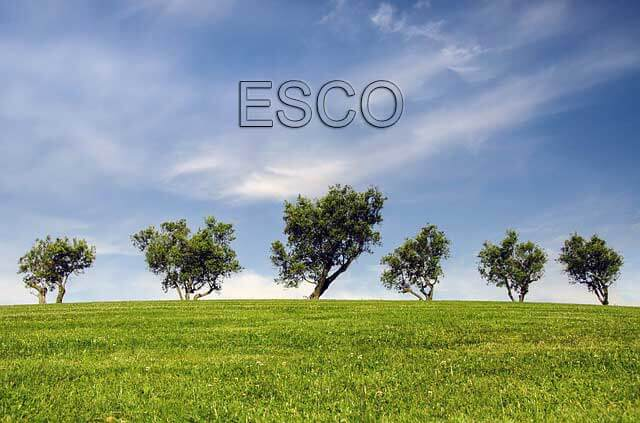 About an ESCOs